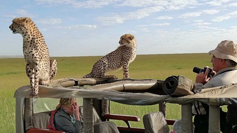 Africké safari zájezd Keňa gepardi na autě
