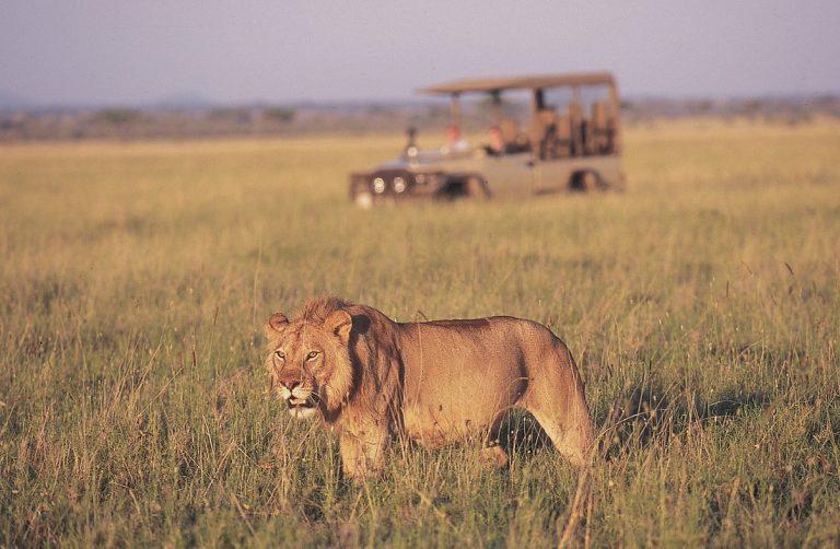 Africké safari zájezd Keňa setkání se lvy