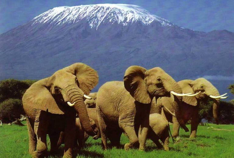 Africké safari zájezd Keňa sloni pod Kilimandžárem