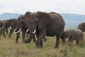 Národní park Amboseli