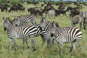 Národní park Naivasha Lake africké safari