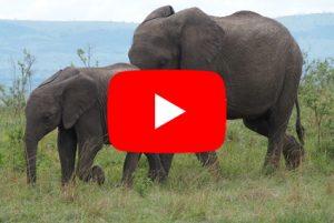 Videopozvánka do Keni